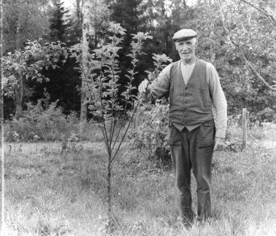 Henning karlsson